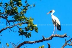 BIRD WATCHING, HETAUDA
